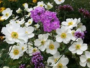 Quoi Planter En Automne : pour faire du jardinage en automne vous devez savoir quoi ~ Melissatoandfro.com Idées de Décoration