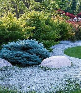 Bodendecker Blaue Blüten : winterharte bodendecker kollektion bodendecker stauden bei baldur garten ~ Frokenaadalensverden.com Haus und Dekorationen