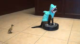 cat on roomba shark cat on roomba chasing duck original hd twt version