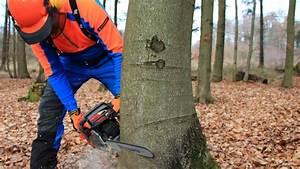 Baum Fällen Technik : baum f llen sicher und richtig teil 1 grundlagen youtube ~ A.2002-acura-tl-radio.info Haus und Dekorationen