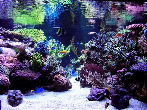 saltwater aquascape aesthetics of aquascaping part ii reefs