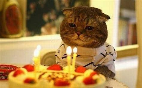 perche oggi  la festa del gatto wired