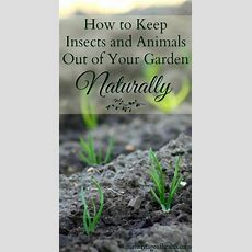 How To Keep Insects And Animals Out Of Your Garden
