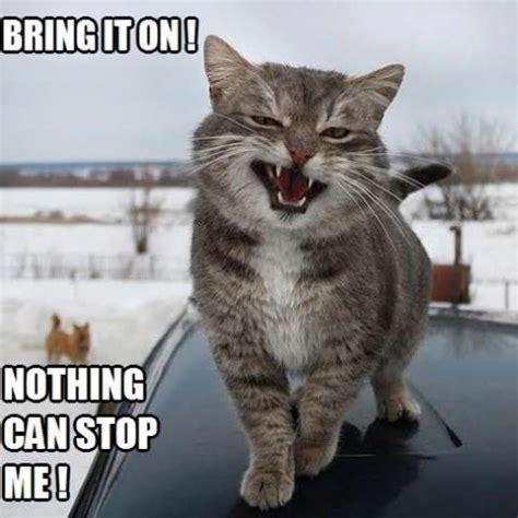 bring   kittyworks