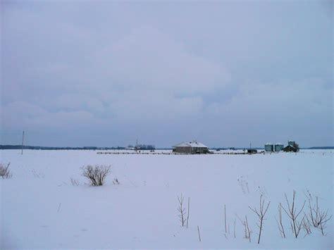 gallery for gt snowy owl habitat