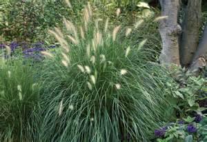 Home Depot Grass Seed