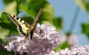 Spring Butterfly HD Desktop Background Wallpapers 7758 ...