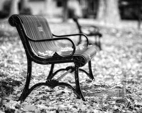 Black White Bench by Autumn Bench Landscape In Black And White Photograph By
