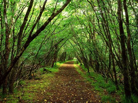 Green Forest Photo by Road In Green Forest Wallpaper Wallpaper Me