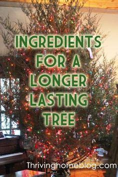 add to xmas tree water best 25 real tree ideas on tree cutting our