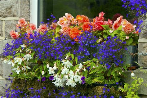 cascading flowers for window boxes 40 window and balcony flower box ideas photos