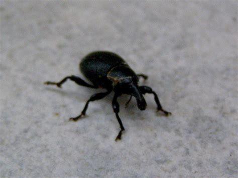 Käfer Im Westerwald