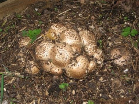 Pilze Im Garten Identifizieren by Pilze Im Garten Pflanzenbestimmung Pflanzensuche