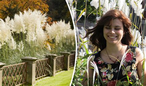 Pampas Grass Plunge In Sales After Being Linked To