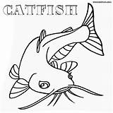 Catfish Coloring Pages Fish Drawing Cat Template Bullhead Getdrawings Sketch Templates Animal sketch template