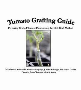 Tomato Grafting Guide