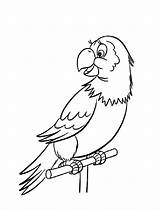 Parrot Coloring Pages Animals Printable sketch template