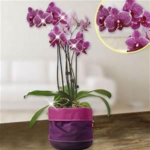 Luftwurzeln Bei Orchideen : rosa orchidee kaufen pinke orchidee im online shop ~ Frokenaadalensverden.com Haus und Dekorationen