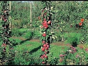 Les Plus Beaux Arbres Pour Le Jardin : planter un arbre fruitier pour petit jardin youtube ~ Premium-room.com Idées de Décoration