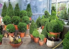 image gallery pflanzen garten - Buchsbaum Balkon