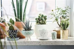 Pot Pour Cactus : 7 different way to indoor plants decoration ideas in ~ Premium-room.com Idées de Décoration