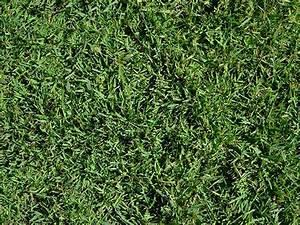 25+ best ideas about Zoysia grass on Pinterest