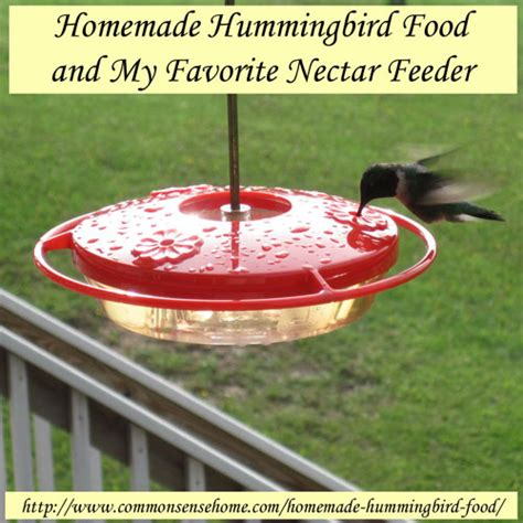homemade hummingbird food herbs and oils hub