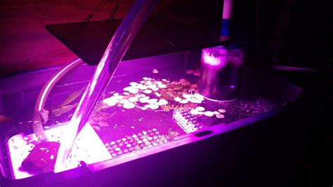 refugium led grow lights details questions about the spider cob led grow light