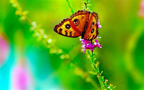 butterfly buetiful hd wallpapers pictures high quality