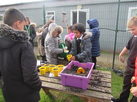 year growing seeds prince wales primary school childrens