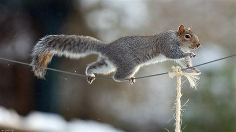 squirrel jump animals impossible mission funny rogue course productions talking obstacle nuts stealing dawn dane bbc run barkpost
