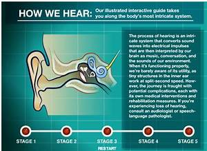 Hearsaylw  The Ear Book  An Interactive Guide To The
