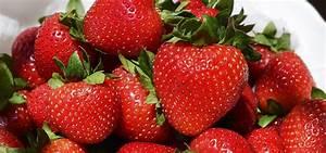 Erdbeeren Pflanzen Die Wichtigsten Tipps : erdbeeren pflanzen tipps zur richtigen pflege und ernte ~ Lizthompson.info Haus und Dekorationen