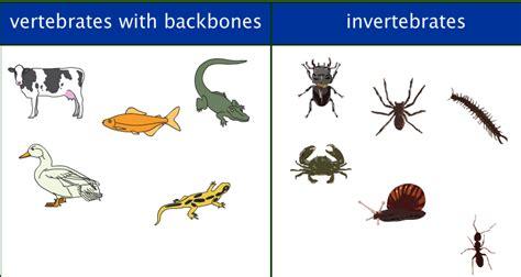 vertebrate animals invertebrate between classification vertebrates invertebrates vertebrae differences colegio amazing example ant different snake mammals clasification dog three segundo