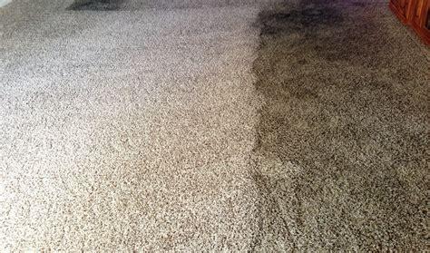 nj s 1 carpet cleaning service near me