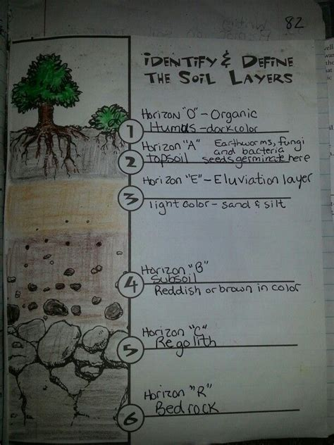 soil layers soil layers  grade science sixth
