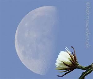 Pflanzen Nach Dem Mond : mondkalender kaktusnewskaktusnews ~ Lizthompson.info Haus und Dekorationen
