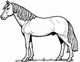 Coloring Pony sketch template