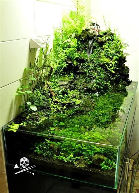 Planted Aquascape by 32 Best Images About Planted Aquariums On