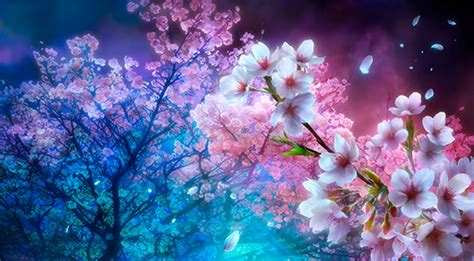 Anime Wallpaper Cherry Blossom by 41 Anime Cherry Blossom Wallpaper On Wallpapersafari