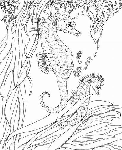 Coloring Seascape Pages Adult Ocean