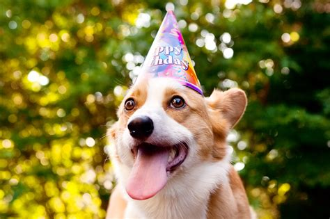 Corgi Birthday Meme - image gallery happy birthday corgi