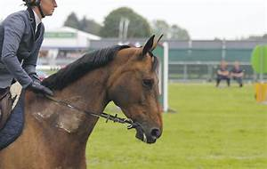 Check out this leather bit that doesn't need a bridle
