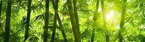 Buddha Bilder Kostenlos : bambus parkett bambusparkett f r ihre raumgestaltung ~ Watch28wear.com Haus und Dekorationen