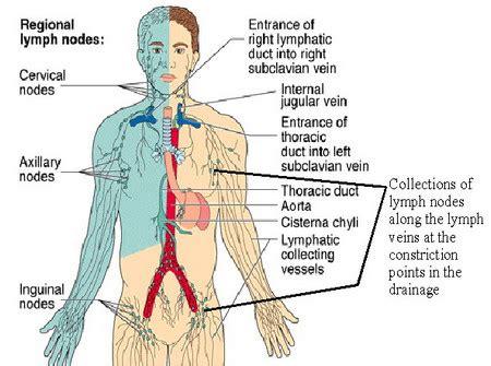 lymph node locations neck groin ear diagram pictures