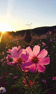 Flowers Phone Wallpapers - Top Free Flowers Phone ...