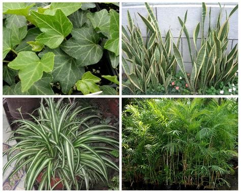 10 Plants That Purify The Air In Your Environment Review