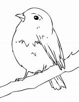 Robin Coloring Baby sketch template