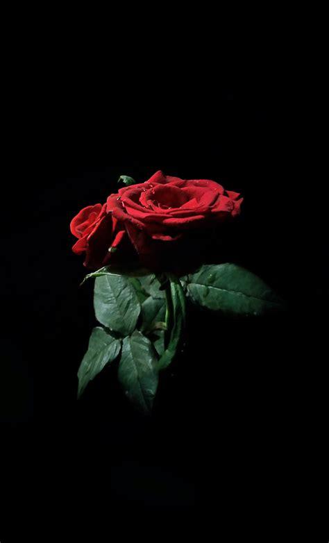 gambar wallpaper bunga gelap
