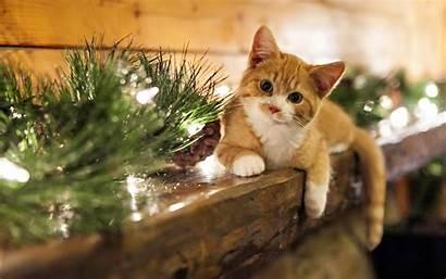 Cat Christmas Wallpapertag
